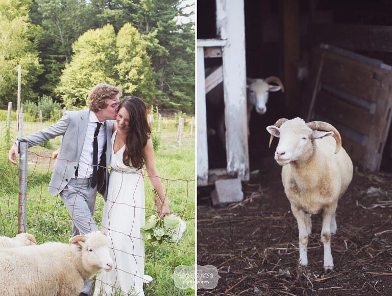 backyard-nh-wedding-film-photography-15