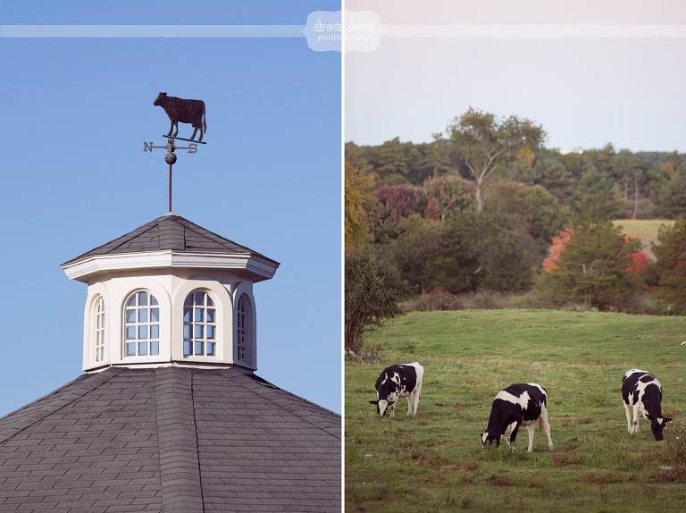 nh-farm-engagement-photos-09-copy