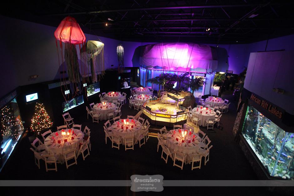Mystic Aquarium Ct Vintage Inspired Destination Wedding
