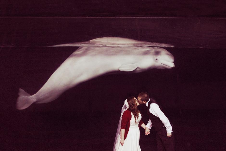 Mystic Aquarium Destination Diy Wedding Photography Zoo