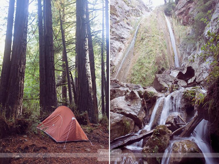 big-sur-redwoods-ca-04-copy