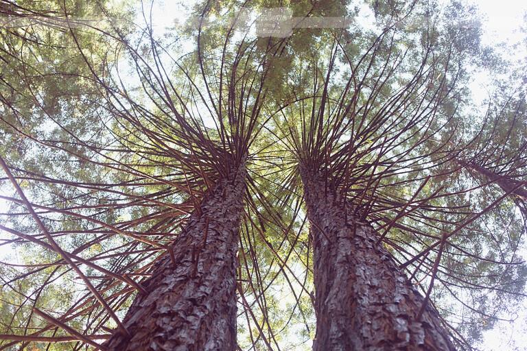big-sur-redwoods-ca-08