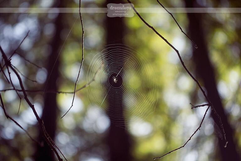 big-sur-redwoods-ca-09
