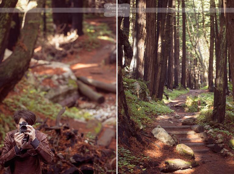 big-sur-redwoods-ca-11-copy