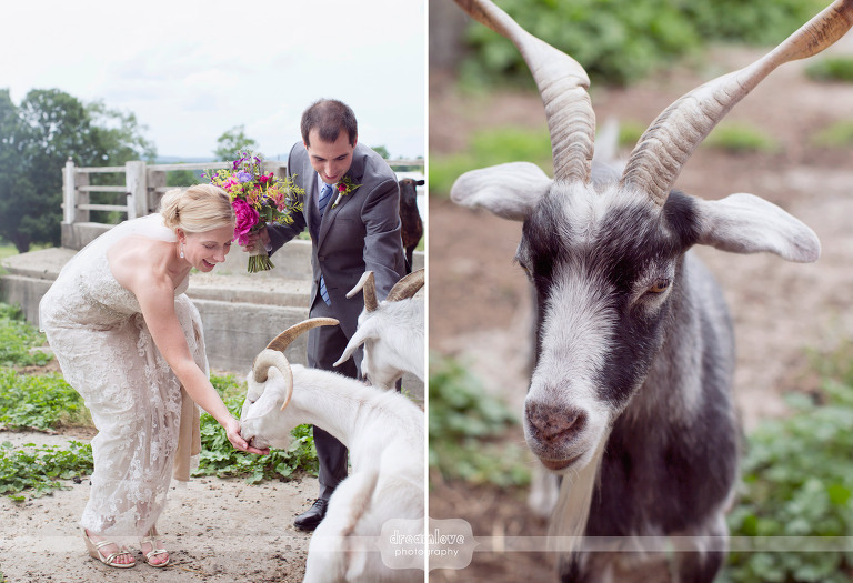 alysons-orchard-nh-wedding-41