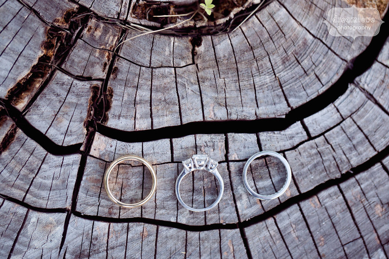 Unique wedding rings photo on tree stump at the Hildene in Manchester, VT.