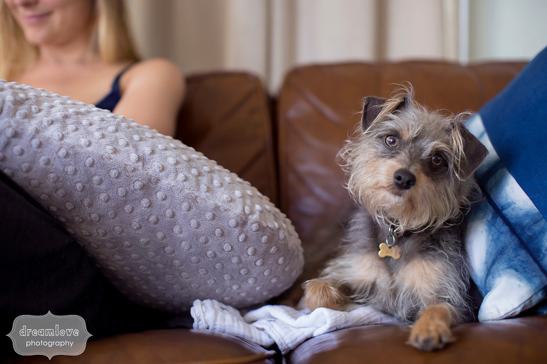 Funny photo of a confused terrier dog on the couch with new baby.