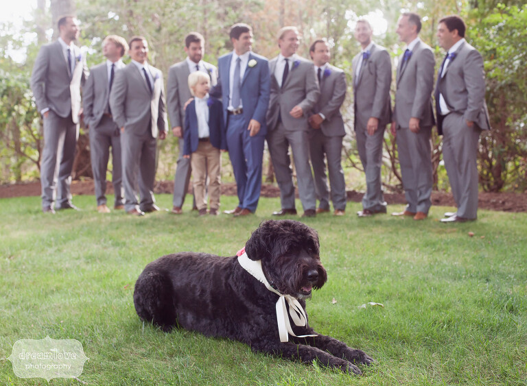 Great photo of Juno, the Bouvier des Flandres dog with this wedding party.