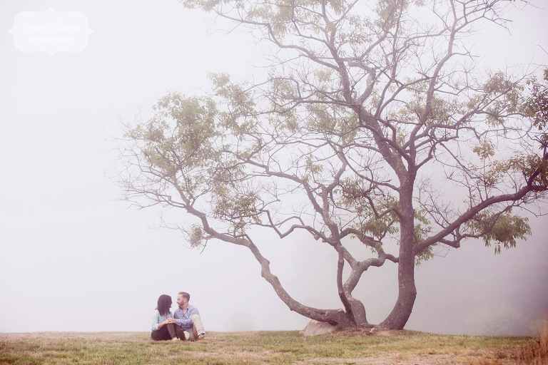 Ethereal engagement photo of couple under a coastal tree on the Great Lawn in MA.