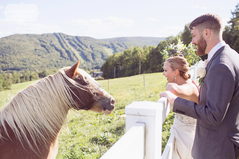 Bride and groom greet a friendly horse at the Warfield House Inn wedding venue in Charlemont, MA.