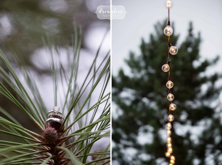 The wedding rings carefully placed in pine trees for some nature wedding photos at the Moraine Farm in MA.