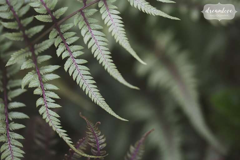 Natural engagement photography in Western MA includes a mix of nature photos like this Japanese fern.