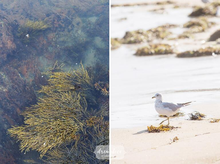 Beach wedding details with seaweed and seagull on North Shore.