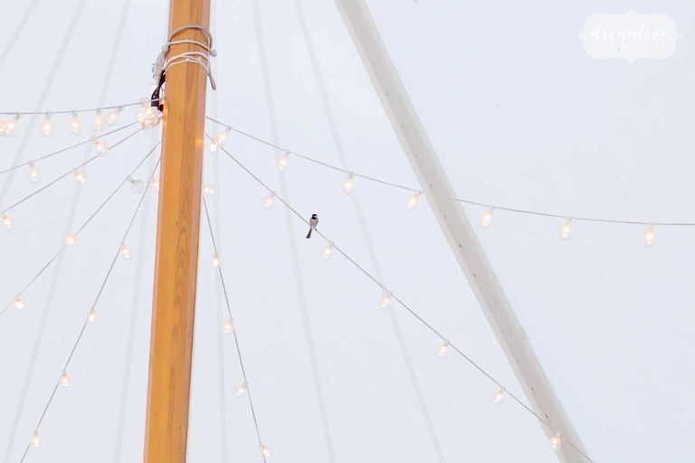 A bird sits on a wire inside of the reception tent at this Glen Magna Farms wedding.