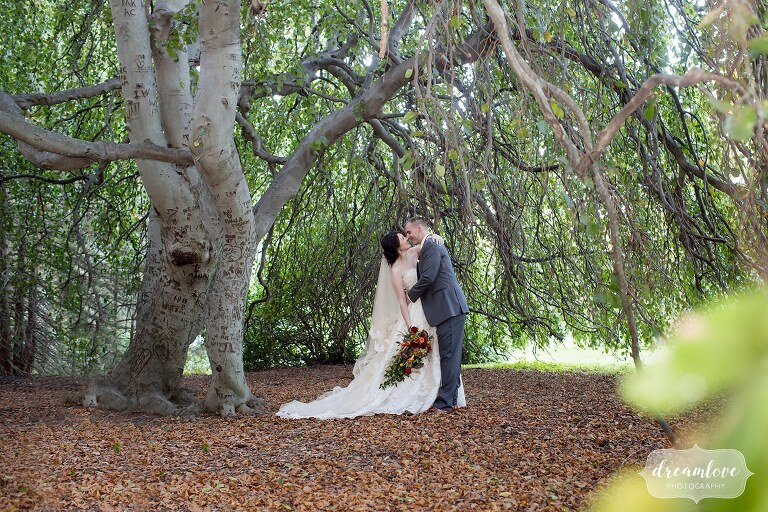 The bride and groom kiss under a giant tree at the Glen Magna Farms wedding.