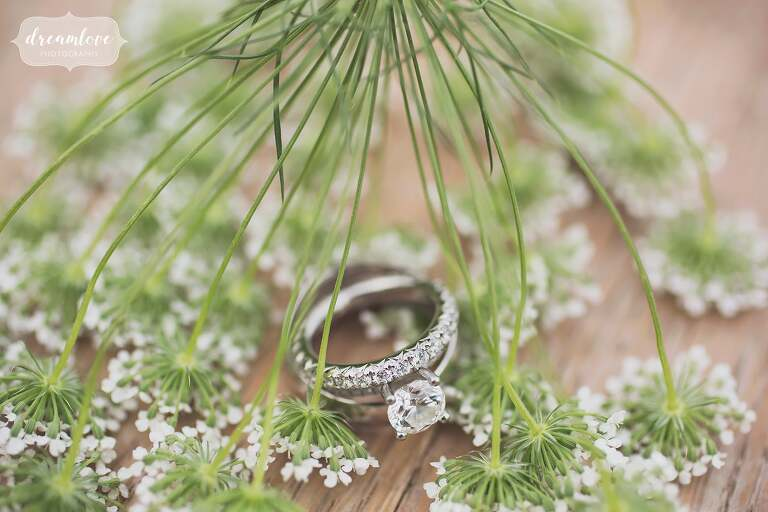 Fine art wedding photography rings and Queen Ann's Lace.