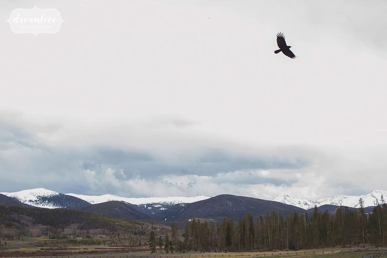 Raven flies over mountains at Devil's Thumb horse ranch venue.