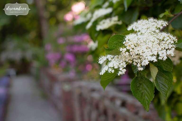 Summer flowers blooming in garden at the Bradley Estate wedding venue.