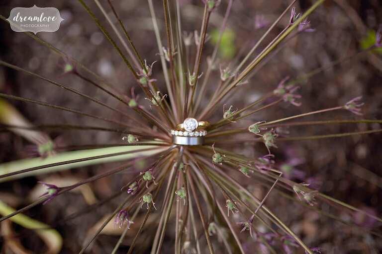 Creative wedding photographer captures rings in alium flower.