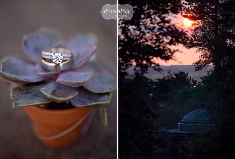 Wedding ring on a purple succulent at this Ipswich MA wedding.